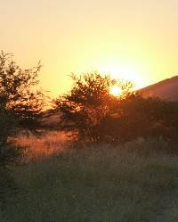New Horizons: the Namibian sunset in the bush
